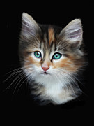 Cat Portraits Prints - Cassiopeia  Print by Julie L Hoddinott