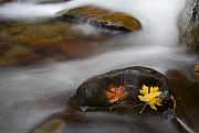 Fall Leaves Photo Originals - Castaways by Mike  Dawson