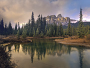 Pinaceae Prints - Castle Mountain And Boreal Forest Print by Tim Fitzharris
