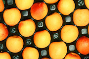 Apricots Posters - Castlebrite Apricot Poster by Photo Researchers