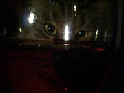 Wild Rose Studio - Cat - Through Wine Glass