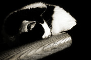 Black And White Cats Posters - Cat and Bat Poster by Andee Photography