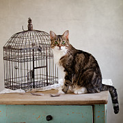 Cage Digital Art - Cat and Bird by Nailia Schwarz