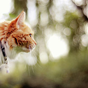 Cat And Bokeh Background Print by Maria Kallin