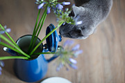 Tin Can Art - Cat and Flowers by Nailia Schwarz