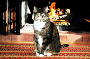 Valerie Rakes - Cat and Hearth