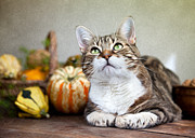 Relaxed Prints - Cat and Pumpkins Print by Nailia Schwarz