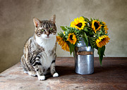 Vintage Looking Framed Prints - Cat and Sunflowers Framed Print by Nailia Schwarz