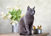 Country Cottage Photos - Cat and Tulips by Nailia Schwarz