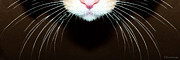 Happy Black Cats Posters - Cat Art - Super Whiskers Poster by Sharon Cummings