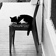 Instamillion Art - #cat, #blackandwhitephotography by Thomas Hallmark