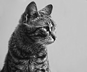 Hdr Look Photo Posters - Cat Poster by Chelaru Catalin Ionut