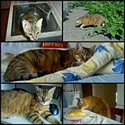 Petstagram Art - #cat #cirmi by Tibor Kiraly