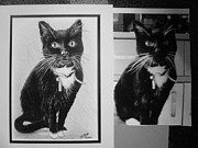 Pets Art Drawings Prints - Cat commission sample Print by Andrew Read