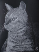Cat Portraits Pastels Prints - Cat Print by Cybele Chaves
