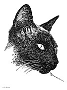 Kittin Framed Prints - Cat Drawings 5 Framed Print by Gordon Punt