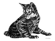 Kittin Framed Prints - Cat Drawings 6 Framed Print by Gordon Punt