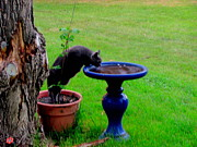 Amy Bradley - Cat Drinks Bird Bath...
