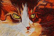 Shahid Muqaddim Framed Prints - Cat Eye Framed Print by Shahid Muqaddim