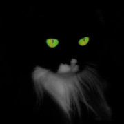 Cat Digital Art - Cat Eyes by Gothicolors And Crows