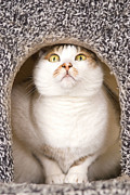 Alertness Photos - Cat From Cats House by Lawren