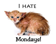 Myeress Posters - Cat Hates Monday Poster by Joe Myeress