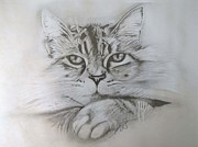 Paula Steffensen Metal Prints - Cat I. Metal Print by Paula Steffensen