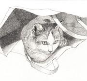Studio Drawings - Cat in a Bag by Kazumi Whitemoon