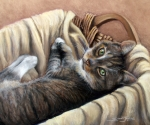 Animal Pastels Framed Prints - Cat in a Basket Framed Print by Susan Jenkins
