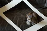 Frame House Metal Prints - Cat in a Frame Metal Print by Micah May