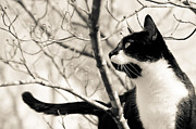 Canvas  Black And White Cat Photos - Cat in a Tree in Black and White by Lori Coleman