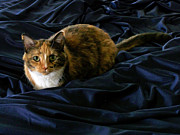 Apron Originals - Cat in Blue Satin by Maureen Ida Farley