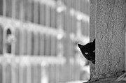 Peeking Posters - Cat In Cemetery Poster by All copyrights reserved by Harris Hui