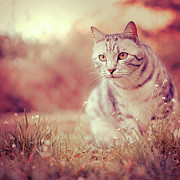 Camera Prints - Cat In Grass Print by Alberto Cassani