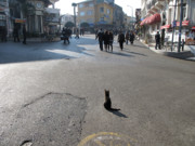 Princes Prints - Cat in middle of road Print by Arvind Garg