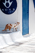 Thin Framed Prints - Cat in Mykonos Framed Print by Laura Melis