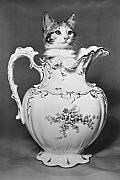 Cat In Pitcher Print by Larry Keahey