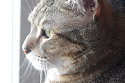 Gib Prints - Cat In Profile Print by J M L Patty