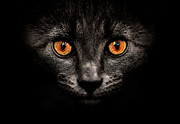 Yellow Eyes Posters - Cat In Shadows. Poster by Ingólfur Bjargmundsson