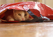 Uli Klinger - Cat In The Bag