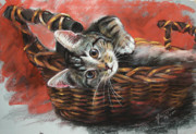 Basket Pastels Prints - Cat in the basket Print by Ylli Haruni