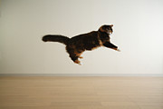 Hardwood Floor Framed Prints - Cat Jumping In Air Framed Print by Junku