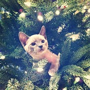 Petstagram Art - #cat #kitten #siamese #siamesecat by Samantha Huynh