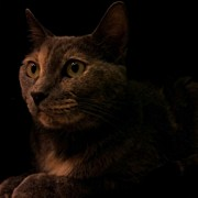 Feline Art - #cat #kittie #kitty #feline #dark #meow by Diana Lovett