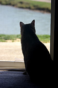 Gib Prints - Cat Looking Out A Window 02 Print by J M L Patty