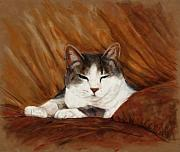 Cat Portraits Pastels Prints - Cat Nap Print by Billie Colson