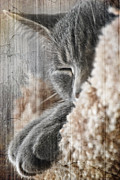 Pets Digital Art Originals - Cat Nap by Melissa Smith
