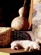 Jan McGready - Cat napping..