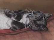Black And White Cats Pastels - Cat Napping by Pamela Humbargar