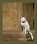 Frisky Photo Posters - Cat  Poster by Odon Czintos